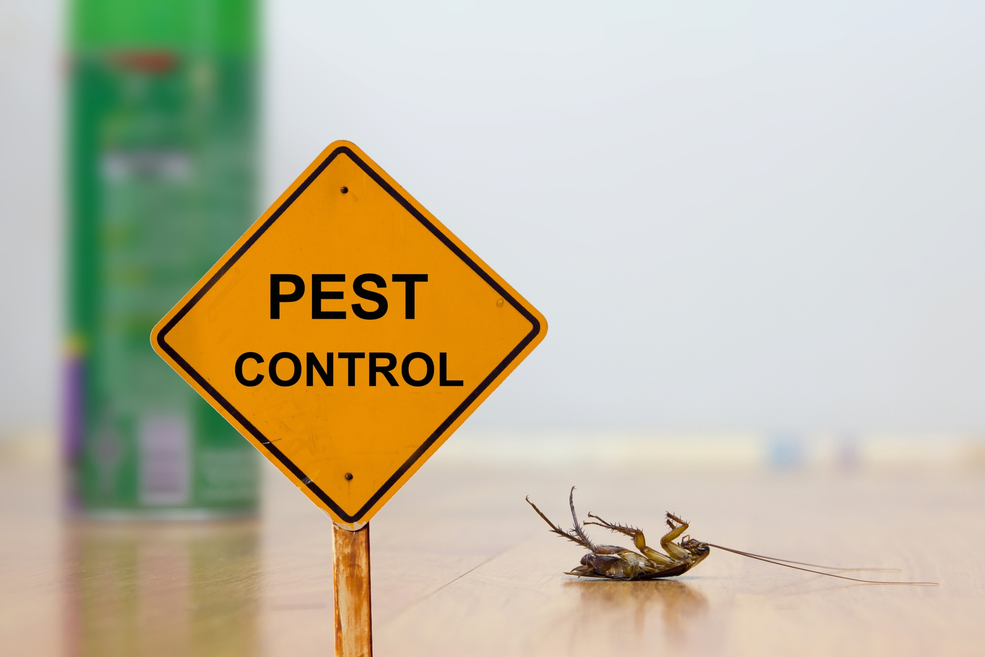 24 Hour Pest Control, Pest Control in Brent Cross, Hendon, NW4. Call Now 020 8166 9746
