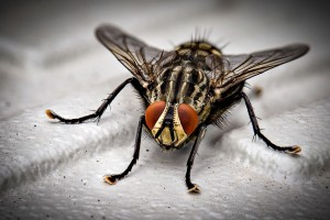 Insect Control, Pest Control in Brent Cross, Hendon, NW4. Call Now 020 8166 9746